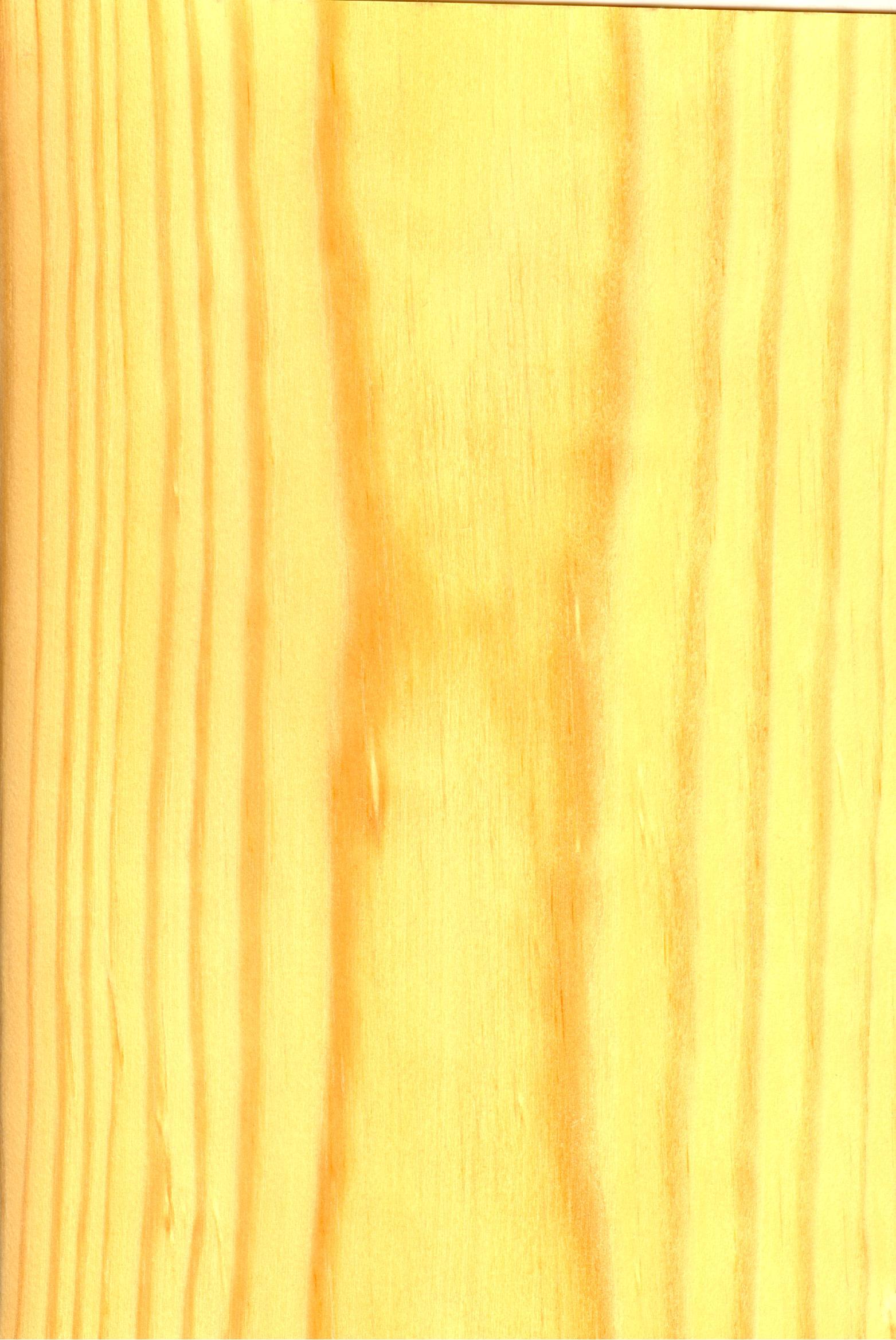 pino gallego